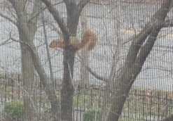 Squirrel outside office 3-12-16